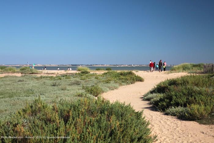 Cordon dunaire de la Pointe de l'Aiguillon