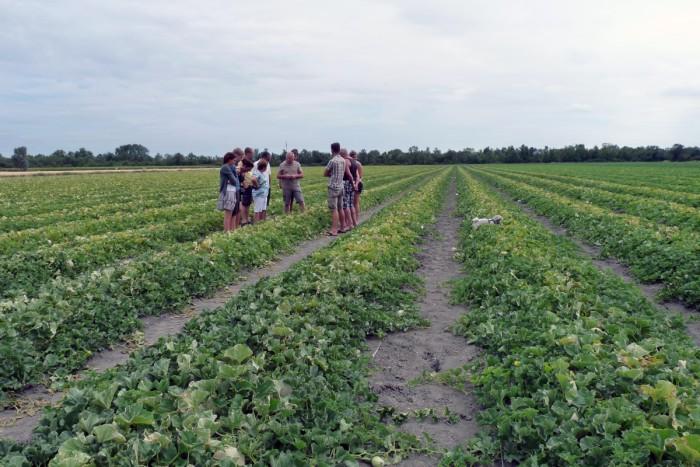 agriculture dans le marais poitevin