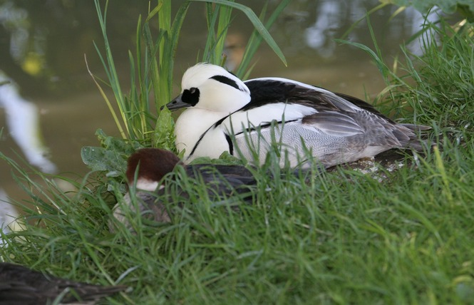 Apprendre à reconnaitre les oiseaux du marais poitevin